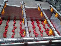 黄瓜清洗机 小西红柿清洗