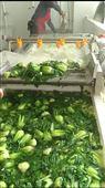 蔬菜杀青机 漂烫机