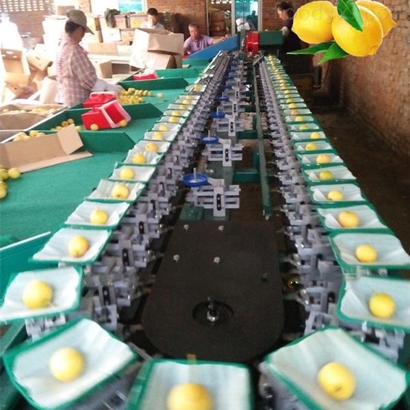 自动上料安岳柠檬分选机 柠檬选果设备厂家