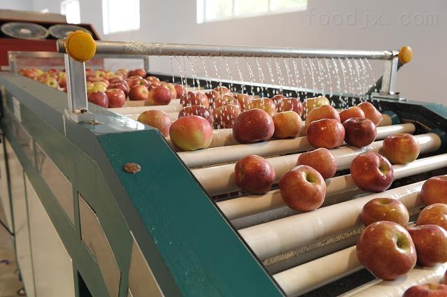 专业做苹果重量分选机的厂家,质量好