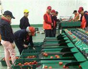 栖霞苹果专用的分选机 凯祥选果机厂家