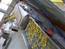 大姜清洗流水線 果蔬凈菜機