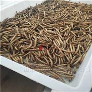 40HMV-超级面包虫大麦虫微波干燥设备厂家