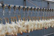 家禽屠宰生产线