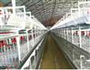 肉鸡层叠式笼养设备