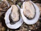 海蛎子精准分选机-生蚝分级专用设备价格