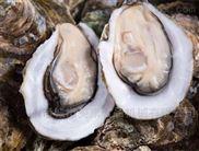 毛辊式高压喷淋海蛎子牡蛎专用清洗机