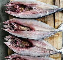 鲅鱼杀鱼机