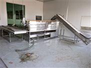 红枣清洗机型号 毛刷机规格 鼎昌机械供应