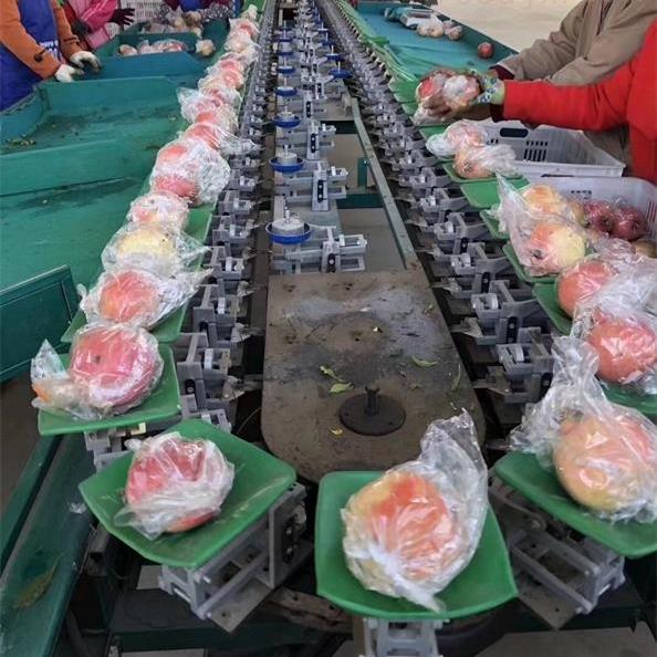 广东白石榴分选神器 水果分级设备