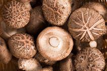 美康蘑菇清洗机