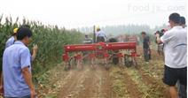 后置式气吸式玉米播种机