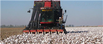 凱斯Cotton Express采棉機