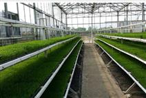 水稻育秧苗床架