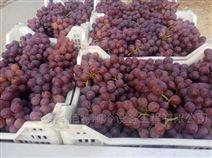 葡萄怎么放入冷库中进行保鲜
