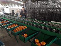 丑橘選果機 沃柑重量分選機廠家在山東