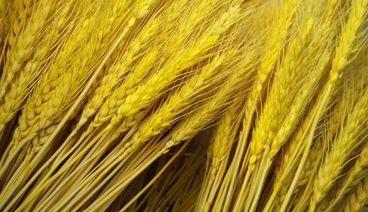 农耕时节将至 这些田间地头的新设备收好