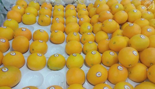 保障无人鲜榨橙汁安全食用 还需在冷链及榨汁机本身下功夫
