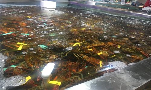 龙虾再度泛滥成灾 清洗机、剥虾机把关舌尖美食安全