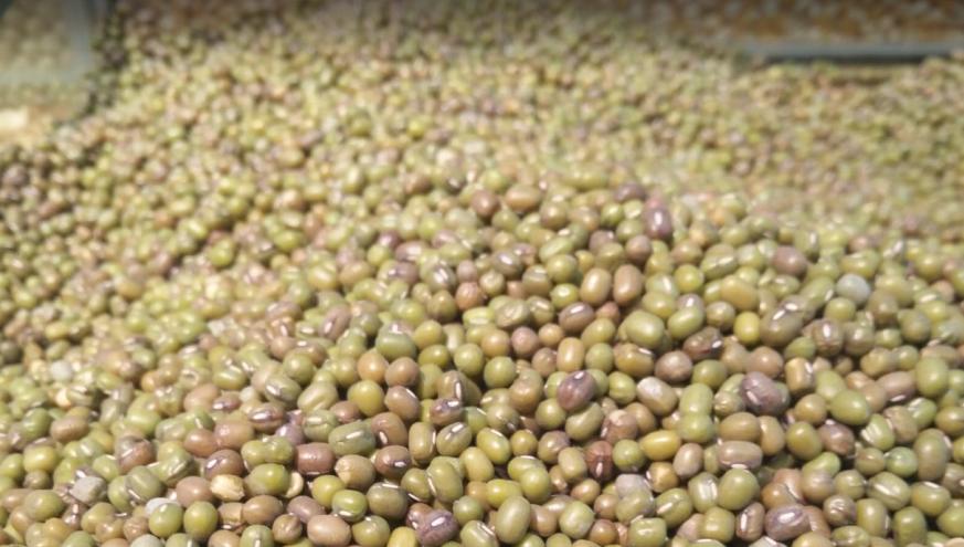 剝離提取分離技術助力提高豌豆蛋白純度和品質
