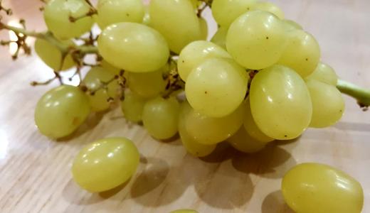 """葡萄產業發展 干燥、發酵等設備""""大顯身手"""""""