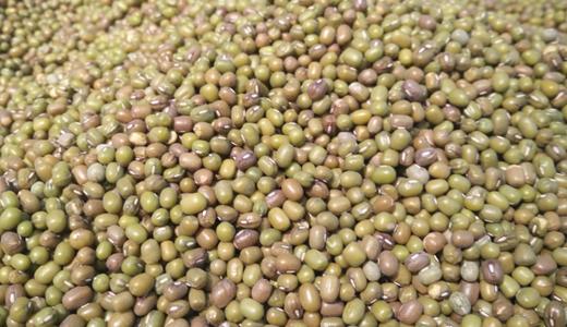 色選機、烘干機解決綠豆百合湯原料生產問題