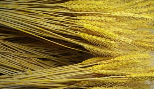 粮食产业规模扩增带动相关加工设备市场协同发展
