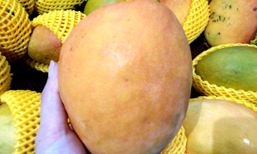 《芒果叶中芒果苷的测定 高效液相色谱法》征求意见